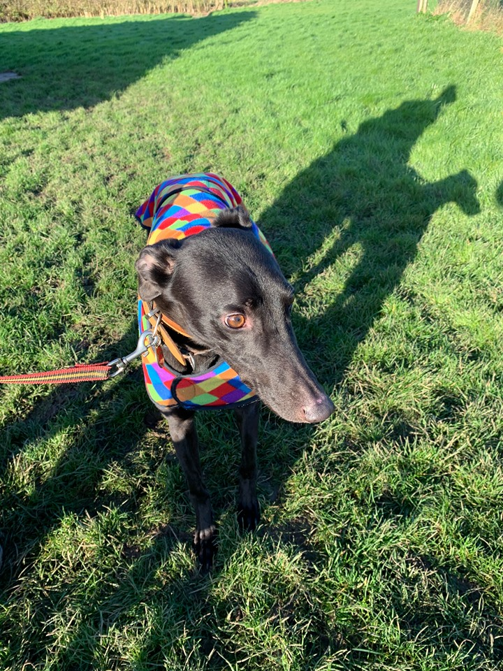 Woody (rehomed)