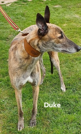 Duke - 7th May