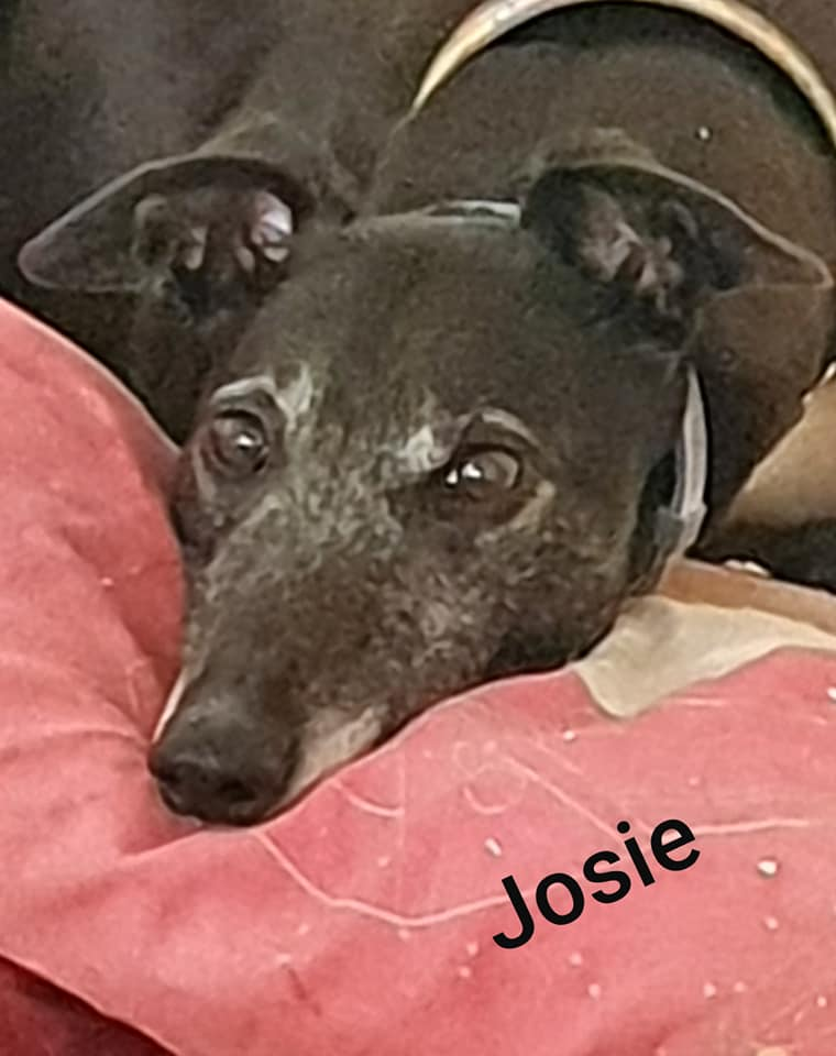 Josie - 14th May