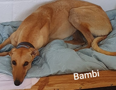 Bambi - 28th May